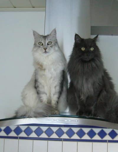 Toni und Kimi