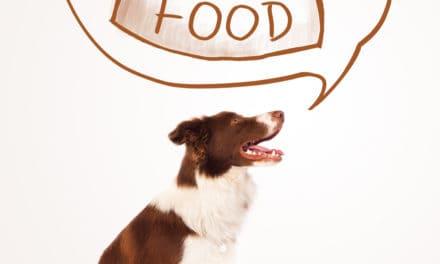 Kochrechner für Hunde