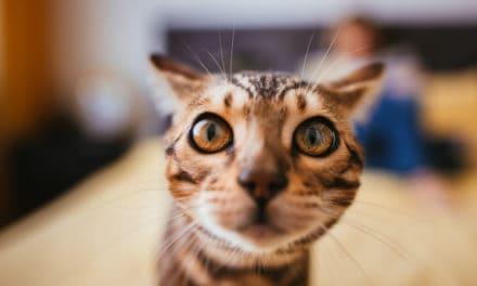 Erweiterte Katzenberatung