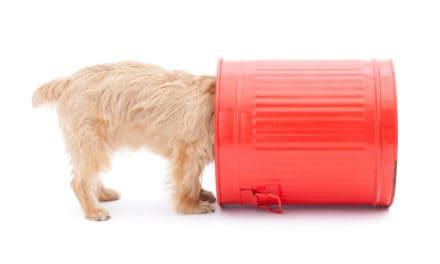 Hunde – Verhalten und Ernährung – 09./10.05.20 – München
