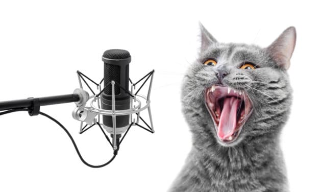 Katzen-Podcasts